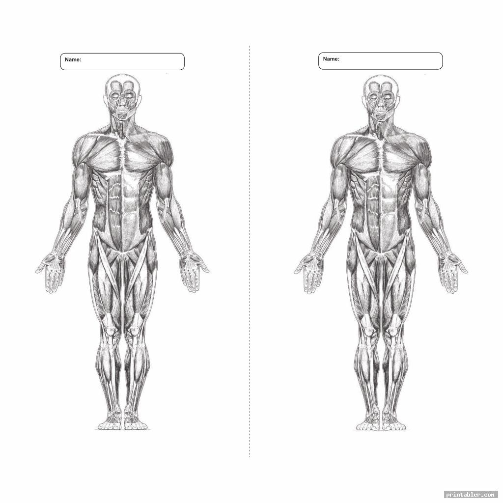 graphic relating to Printable Anatomy Worksheets identify Printable Worksheets Muscle mass Anatomy -