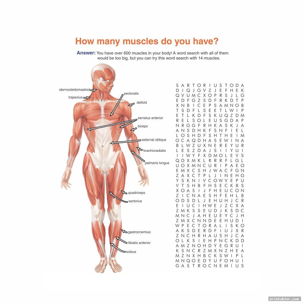 cool printable worksheets muscle anatomy