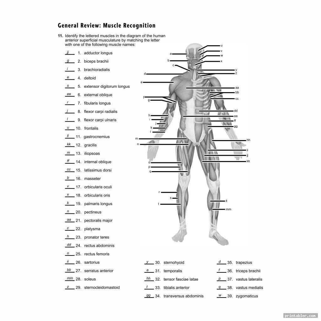 Printable Worksheets Muscle Anatomy - Printabler.com