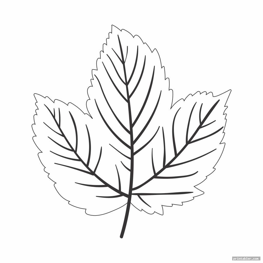 Paper Printable Leaf Patterns