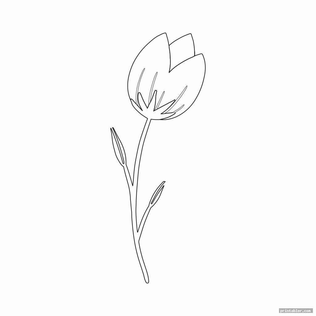 cool tulip template printable
